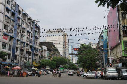 Volée de pigeons