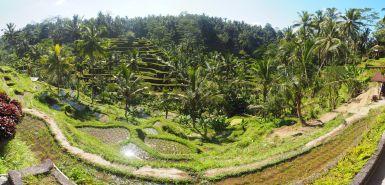 Magnifique vue depuis le point d'entrée vers les rizières