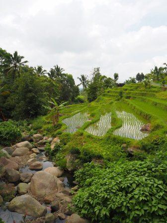 Le bas des terrasses de Jatiluwih