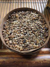 """Grains de café """"luwak"""" nettoyés"""