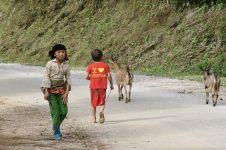 Des enfants croisés sur la route, gardant des chèvres