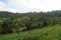 Les paysages verdoyants