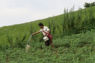 Un paysan traite ses cultures...
