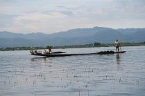 """Des """"pécheurs"""" ramassant des algues, qui sont vendues à des laboratoires"""