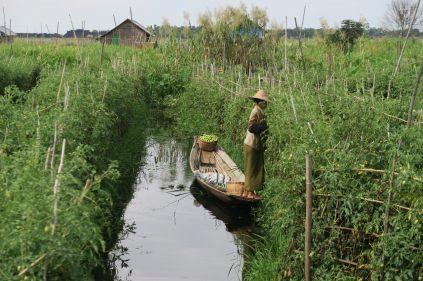Une paysane cultive ses légumes sur des jardins flottant