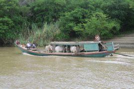 Un bateau transportant des vaches !