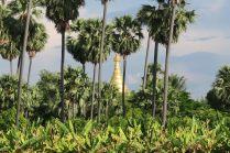 Une stupa dorée au loin