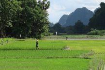 Des paysans travaillant dans les rizières