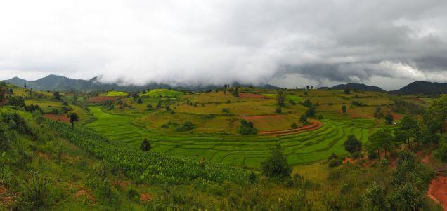 Panorama sur des rizières en terrasses