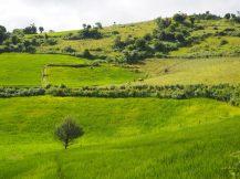 Des paturages et des champs