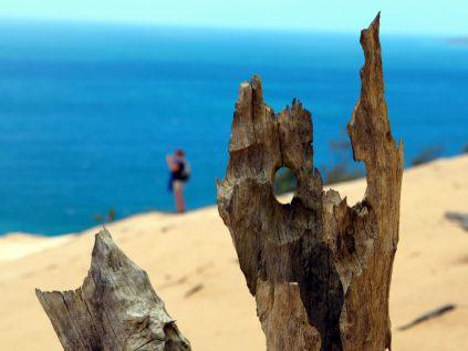 """La dune """"mange"""" de nombreux arbres sur son passage..."""