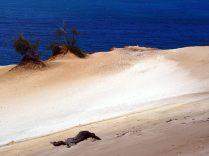 Variations de couleurs dans le sable de la dune
