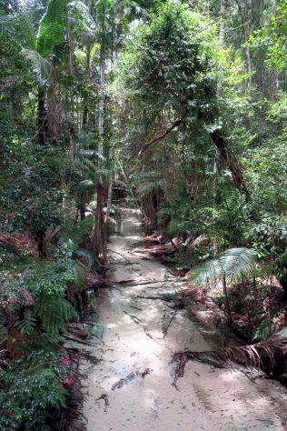 Une ruisseau provenant d'une source de l'île. L'eau est translucide.