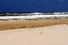 Les vagues qui s'échouent sur l'île Fraser ne semblent pas effrayer les mouettes