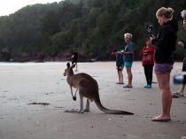 Il y a en fait plus d'humains que de Kangourous sur la plage !