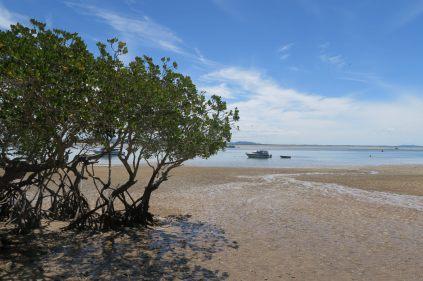 La mangrove qui borde la plage de 1770