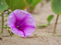 Sur la plage de Mon Repos