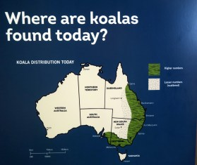 Localisation des Koalas en Australie