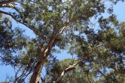 Un Koala se cache sur cette image, saurez vous le retrouver ?