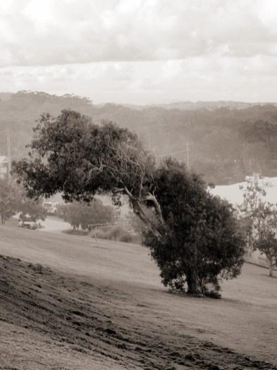 Un arbre couché par le vent