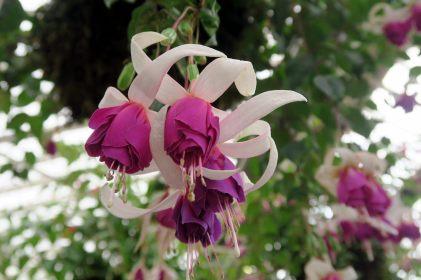Conservatory Fitzroy Garden
