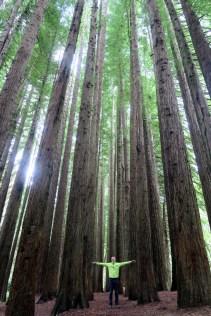 """Julien au milieu des arbres à la """"California Redwood plantation"""""""