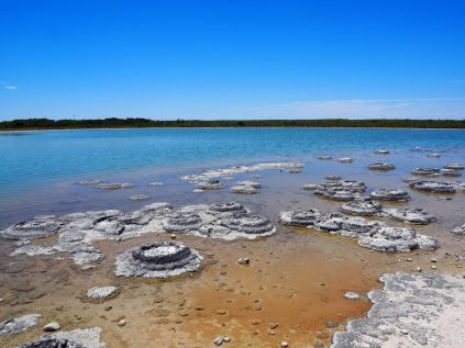 Trombolites (ou Stromatolites) au lac Thétis