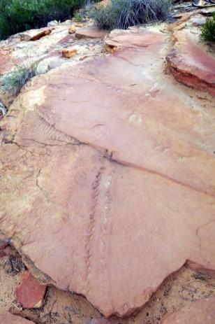 Sur la roche, il est possible de discerner les fossiles des traces d'un Euryptéride (Eurypterida), ou gigantostracés, qui dominaient la terre il y a plusieurs centaines de millions d'années...