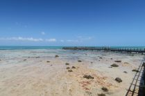 Les plateformes permettant d'observer les stromatolites