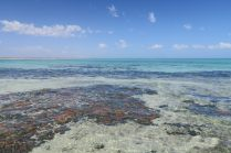Vue sur les stromatolites