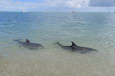 Deux dauphins bien visibles dans l'eau