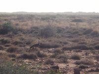 Un oiseau au Cape Range National Park