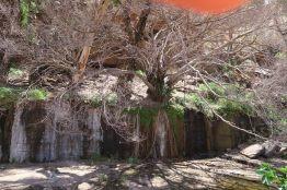 La nature s'approprie l'espace dans les gorges de Dales