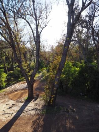 Dans le parc de Nannup, l'arbre indique le niveau des crues