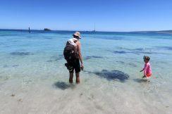 Raies à Hamelin Bay