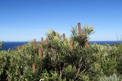Balade dans le Cape Naturaliste
