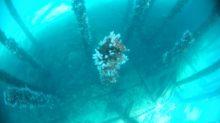 Phot pas très nette des coraux accrochés aux piliers de la jetée