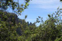"""Vue sur les """"three sisters"""" à travers les branches d'Eucalyptus"""