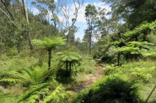 En haut des chutes de Katoomba