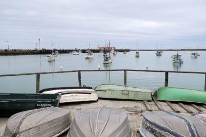 Sur le port d'Oamaru, où à élu domicile une colonie de pingouins bleus