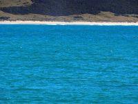Un aileron de dauphin Hector dans l'eau de Purpoise Bay