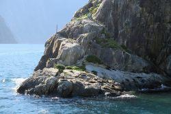 Les otaries à fourrure se reposant à Copper point, le point le plus étroit du fjord