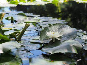 Dans les jardins de Queenstown