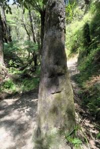 Un tronc gravé lors de la randonnée au Parc national d'Abel Tasman