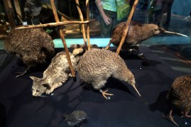 Kiwis au Te Papa Museum
