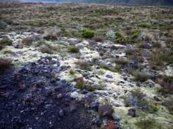 Tongariro Alping Crossing