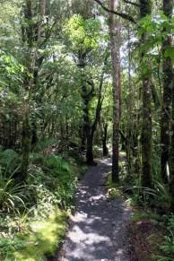La fôret sur la fin du Tongariro Alpine Crossing