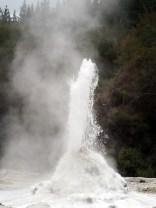 """Le geyser """"Lady Knox"""", parc thermal de Wai-o-tapu, l'éruption du geyser en action, qui monte en intensité"""