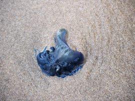 Un truc bizarre sur la plage de Cathedral cove dans la péninsule de Coromandel