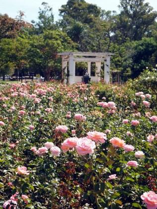 Parque del Rosedal (parc de la roseraie), dans les jardins de Palermo, Buenos Aires